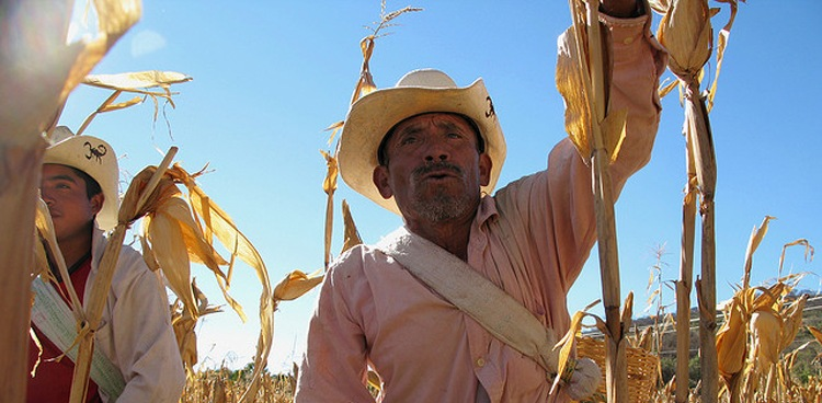 Corn Farmer in Mexico